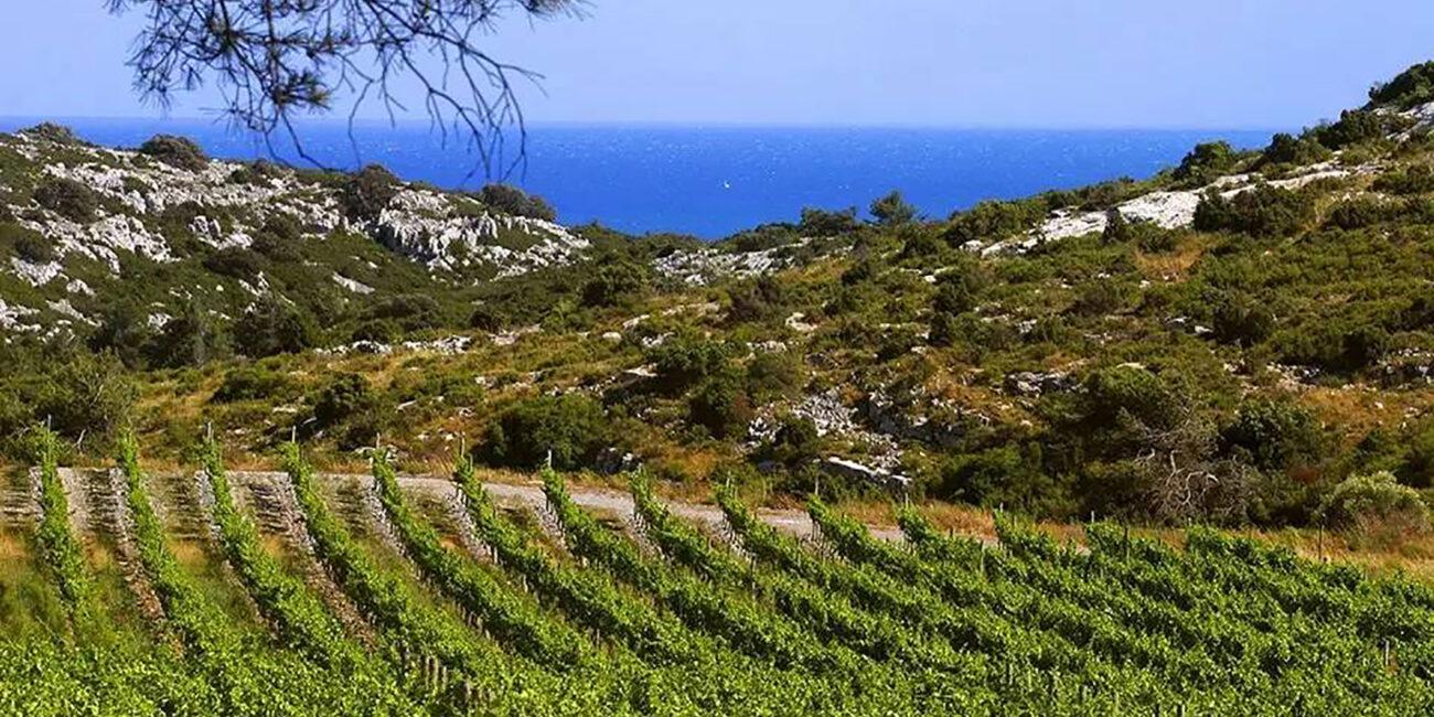 roman-vineyards